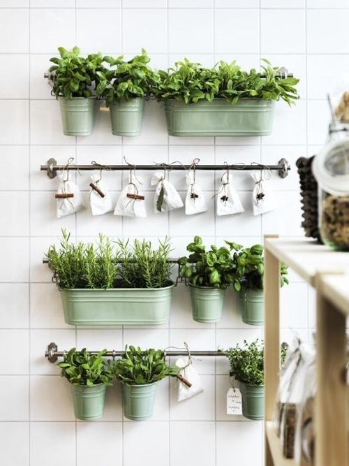 Ideas para cultivar plantas arom ticas decorando la cocina cocinas con encanto - Cultivar plantas aromaticas en casa ...